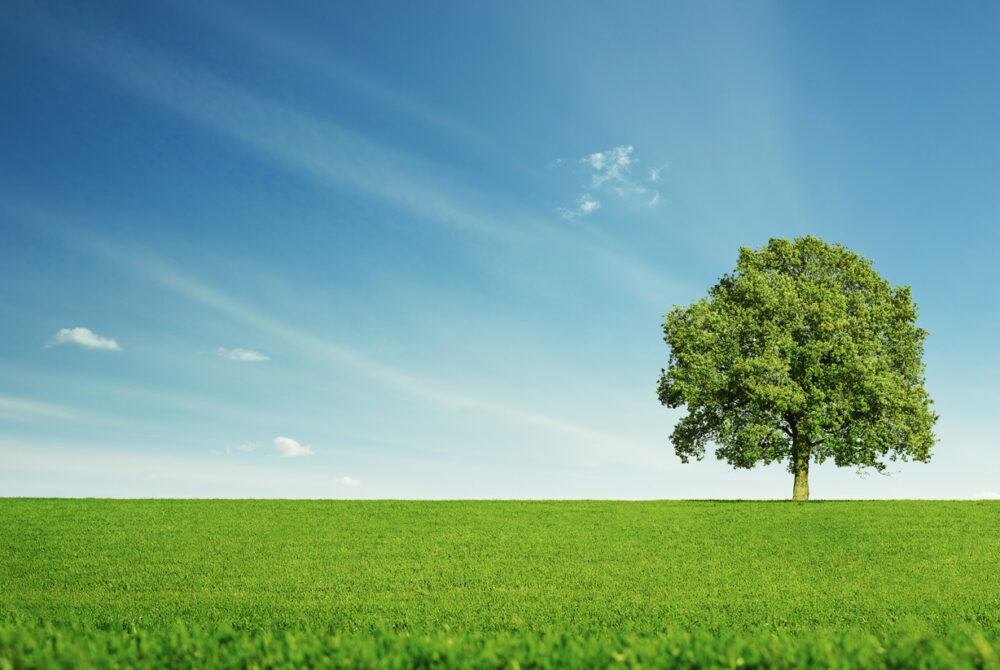 Single tree on a large field under blue skies